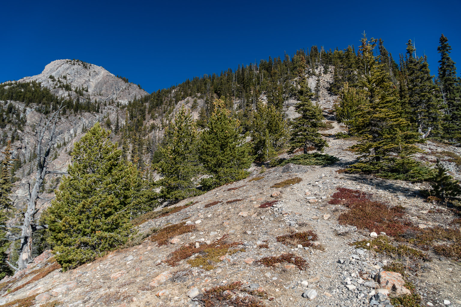 Hiking up the steep, hot south ridge of Mount Cory.